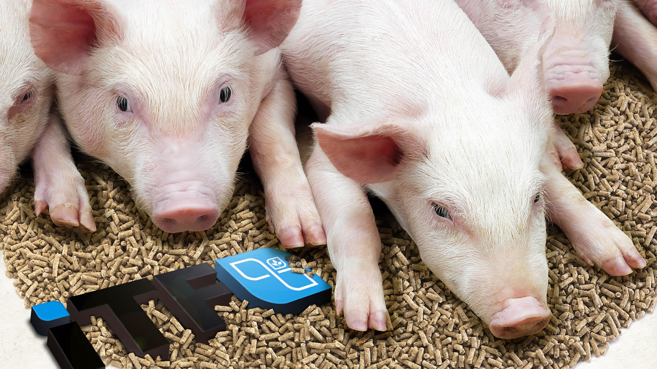 piglets_about